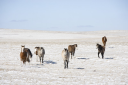 Royalty Free Photo of Horses in a Snow Covered Pasture
