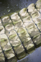 Royalty Free Photo of a Close-up of a Crocodile Tail in Water, Australia