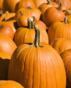 Royalty Free Photo of Pumpkins at an Outdoor Market