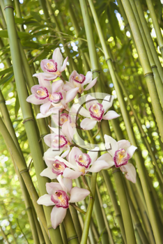 Close-up low angle view of pink orchids and green stalks of bamboo. Vertical shot.