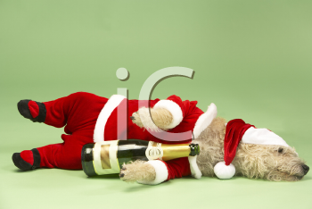 Royalty Free Photo of a Dog in a Santa Suit With a Wine Bottle