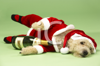 Royalty Free Photo of a Small Dog in a Santa Suit With a Wine Bottle
