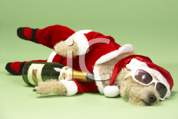 Royalty Free Photo of a Small Dog in a Santa Suit and Sunglasses With a Wine Bottle