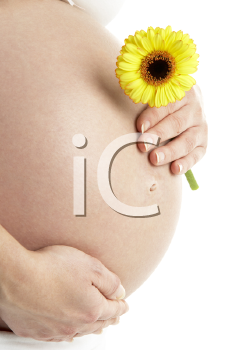 Royalty Free Photo of a Pregnant Woman With a Daisy