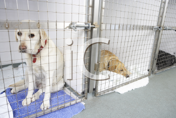 Royalty Free Photo of a Dog in a Kennel