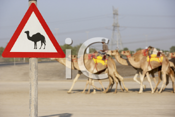 Royalty Free Photo of a Camel Crossing Sign