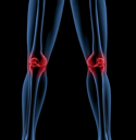 Medical skeleton with a close up of the legs showing pain in the knees