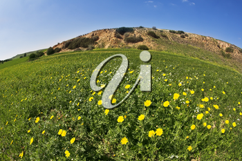 Royalty Free Photo of a Field of Flowers in Israel