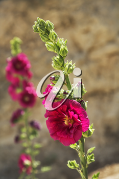 Beautiful pink and lilac flowers on blur a background