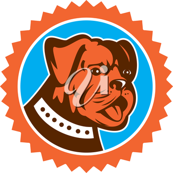 Illustration of a bulldog dog mongrel head mascot showing tongue set inside rosette on isolated background done in retro style.