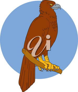 Drawing sketch style illustration of an Australian wedge-tailed eagle or bunjil Aquila audax, sometimes known as the eaglehawk, the largest bird of prey in Australia perced on a branch viewed from the