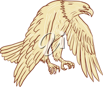 Drawing sketch style illustration of bald eagle flying with wings down viewed from the side set on isolated white background.