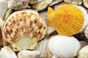Royalty Free Photo of Seashells