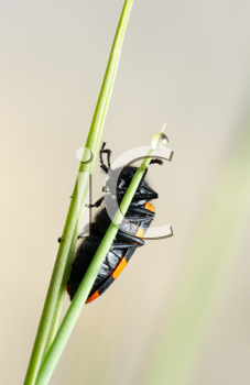 Royalty Free Photo of an Orange and Black Beetle