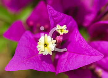 Royalty Free Photo of a Bright Pink Flower
