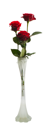 Royalty Free Photo of Three Roses in a Vase