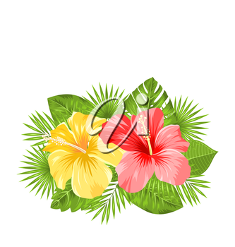 Illustration Beautiful Colorful Hibiscus Flowers Blossom and Tropical Leaves, Isolated on White Background. Copy Space for Your Text - Vector