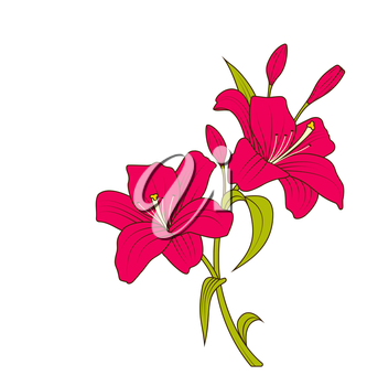 Illustration Linear Colored Sketch of Beautiful Lily Flowers Isolated on White Background. Hand Drawn Background. Copy Space for Your Text - Vector