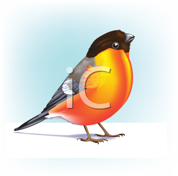Royalty Free Clipart Image of a Robin