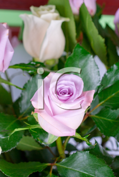 Royalty Free Photo of a Bouquet of Pink Roses
