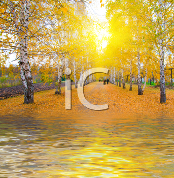 Royalty Free Photo of a Forest in Autumn