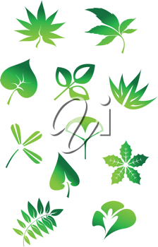 Set of green leaves icons and symbols isolated on white background