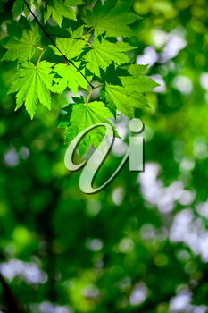 Royalty Free Photo of a Green Leaf Background