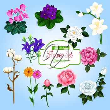 Flower set. Rose, daisy, tea rose, peony, lily, violet, bell flower, cyclamen and cotton flower branch. Garden and house flowering plants cartoon design