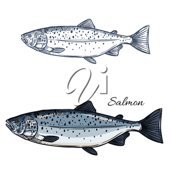Salmon sketch vector fish icon. Isolated sea humpback or pink salmon or trout fish species. Isolated symbol for seafood restaurant sign or emblem, fishing club or fishery market