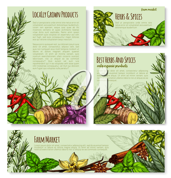 Herbs and spices posters or banners templates for shop or seasonings market. Vector organic bay leaf, chili pepper and tarragon or thyme and basil. Natural herbal spicy sage, rosemary or vanilla