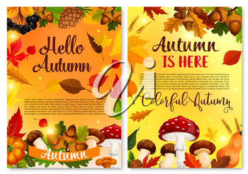 Hello Autumn or Fall is her greeting card or poster design of pumpkin, amanita or chanterelle forest mushroom, rowan berry harvest. Vector pine cone, maple leaf or oak acorn and autumn falling leaves