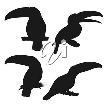 Toucan black silhouettes with vector birds of tropical jungle and Brazilian or Amazonian rainforest. South American wild animals sitting on tree branch, wildlife themes