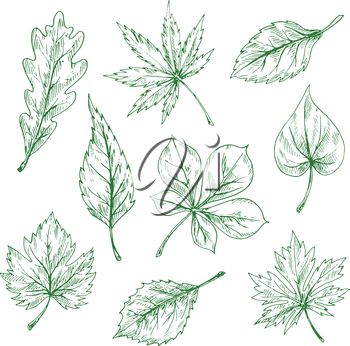 Green leaves of forest and garden trees vintage engraving sketches with foliage of oak, maple, chestnut, cherry, grape, birch, elm and lilac. Great for nature or ecology theme design