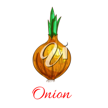 Onion vegetable with green leaf sketch. Yellow onion bulb with sprouted leaf. Healthy food, agriculture, cookbook recipe, organic farming design