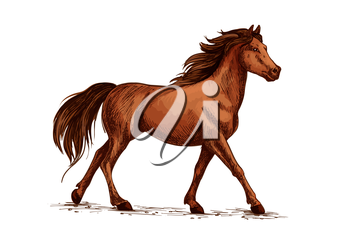 Equine animal or horse, stallion running sketch. Wildlife mustang gait and domestic marish ambling, thoroughbred mare with hoofs on ground or racehorse gallop. Hippodrome, sport club and wild nature t