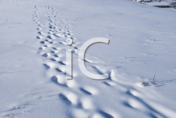Royalty Free Photo of Traces on Snow