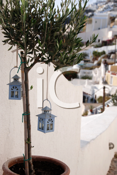 Royalty Free Photo of Little Lanterns in an Olive Tree