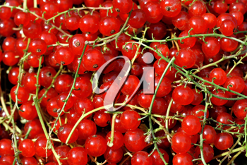 Redcurrant berries closeup background