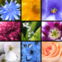 Collage of bright beautiful flowers