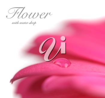 Flower with water drop. Soft focus. Made with lens-baby and macro-lens.