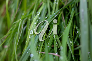 Close up of fresh thick grass with water drops after the rain. Dew drops on green grass in Latvia. Background of wet grass.