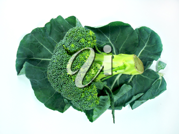 Royalty Free Photo of a Stalk of Broccoli Laying on Large Leafy Greens