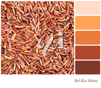 A background of red Camargue rice in a colour palette with complimentary colour swatches