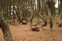 Royalty Free Photo of a Forest in Russia in the Kaliningrad Area on the Coast of the Baltic Sea.