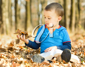 Little boy is reading book while sitting on yellow leaves outdoors