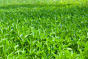 Royalty Free Photo of a Field of Grass and Weeds