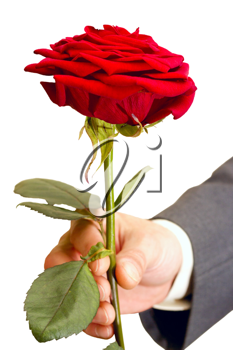 Royalty Free Photo of a Man Holding a Red Rose