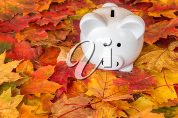 White ceramic piggy bank with autumn foliage