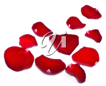 Red rose petals isolated on white background