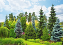 Garden with fir trees on beautiful day
